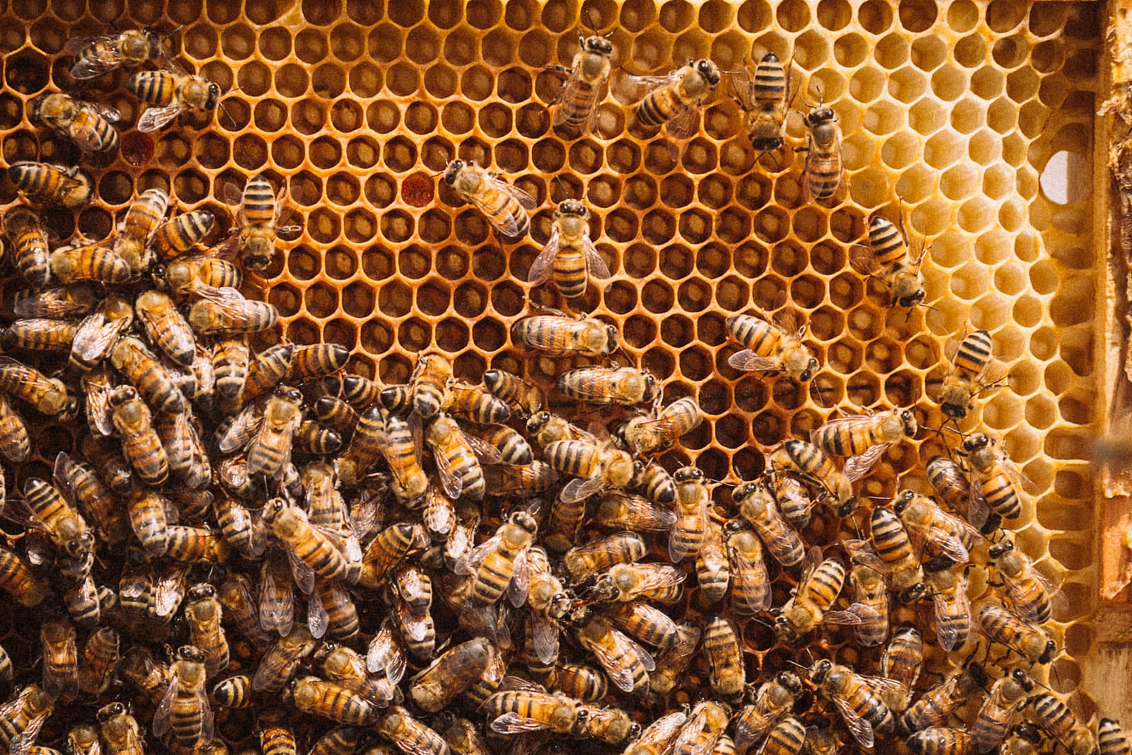 close up of bees